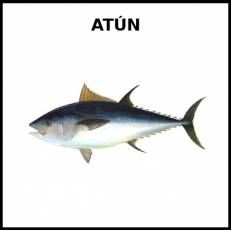 ATÚN (ANIMAL) - Foto