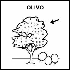 OLIVO - Pictograma (blanco y negro)