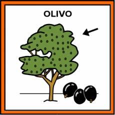 OLIVO - Pictograma (color)