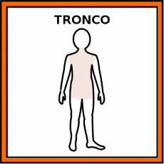 TRONCO (CUERPO HUMANO) - Pictograma (color)