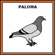 PALOMA - Pictograma (color)