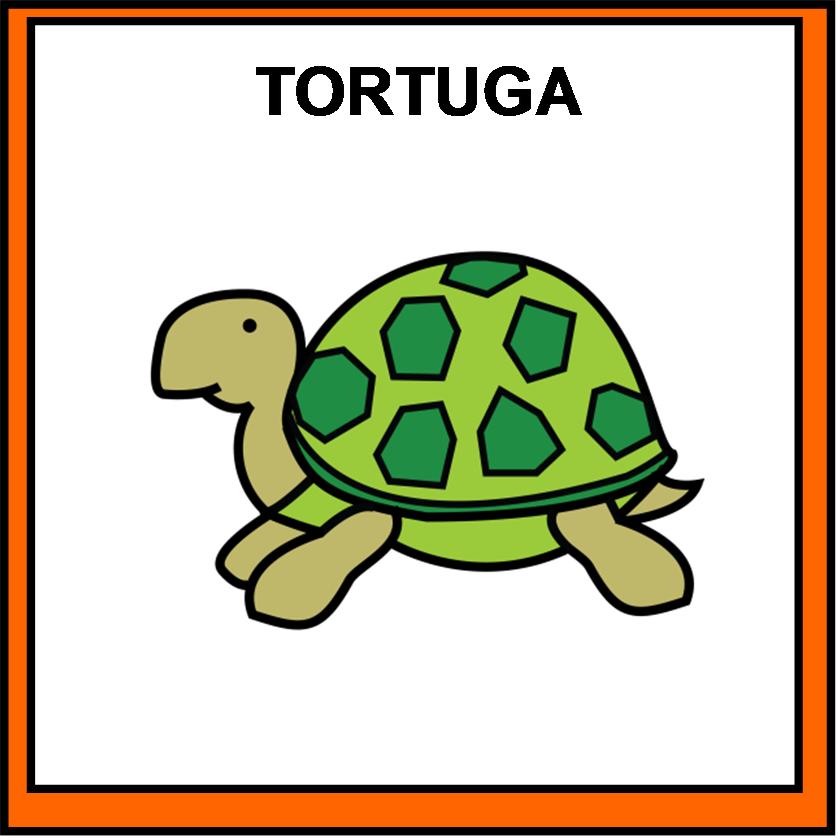 TORTUGA | EducaSAAC